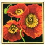 Red Poppy Trio