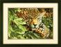 Gold Counted Cross Stitch Leopard In Repose